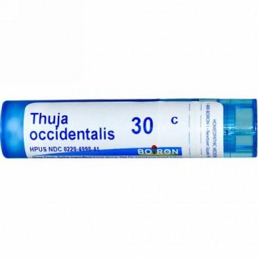 Boiron, Single Remedies, Thuja Occidentalis(ツジャ オシデンタリス)、30C、約80ペレット